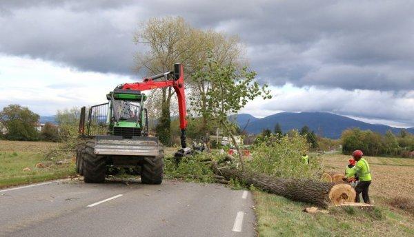abattages arbres sur r d 39 : 2017