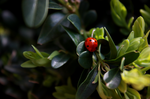 Ladybird Premier avril 2011, Canon 450D+ 18-55