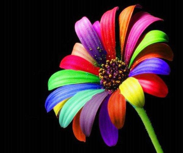 « Le bonheur est en même temps ce qu'il y a de meilleur de plus beau et de plus agréable. »
