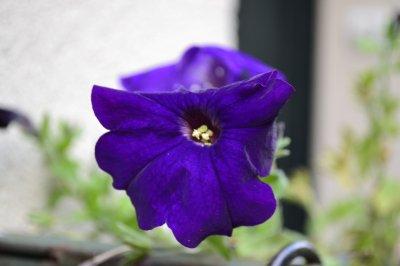 HEY HEY la fleur...