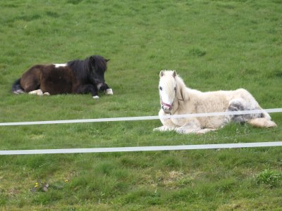 Mes chevaux <3