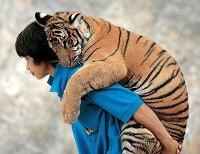 Pour Hachem :Petit Tigre t'apporte un petit toutou  ;)