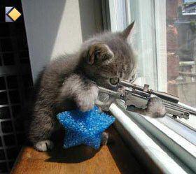 Chat Qui Fait Peur le chat qui fait peur!!! - foufounne53