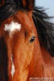Photo de cheval-star30