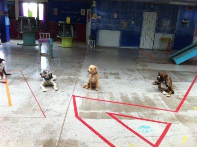 Loussy en formation au  Domaine d'Akela