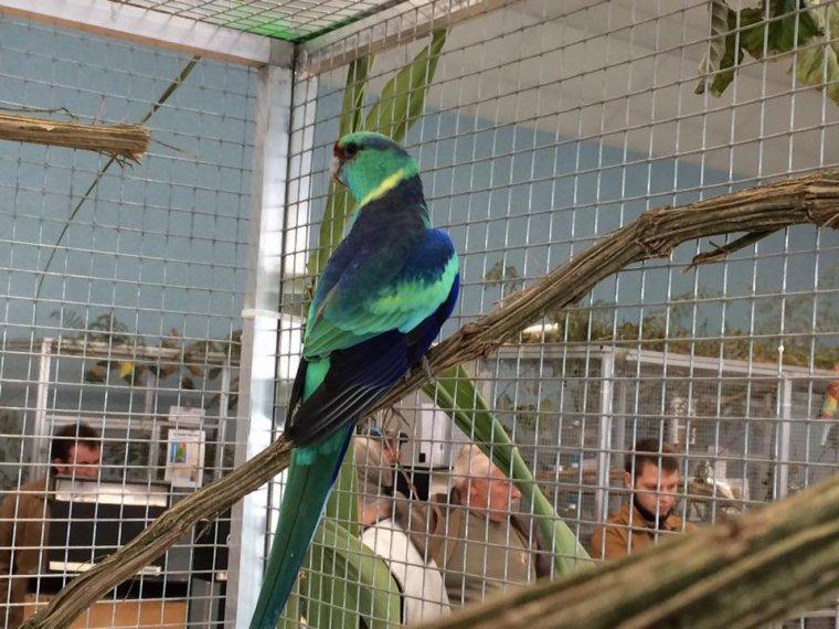 Quelques oiseaux