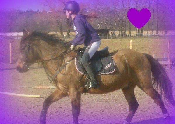 Les  chevaux de Sophie
