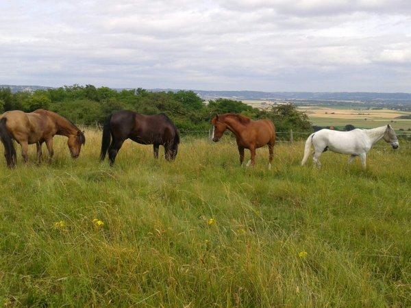 Chevaux a l'herbe = chevaux heureux ♥