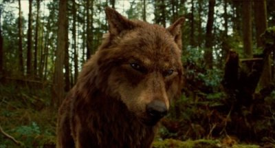 loup =} Quileute