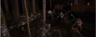 les Cullen vs les Quileute