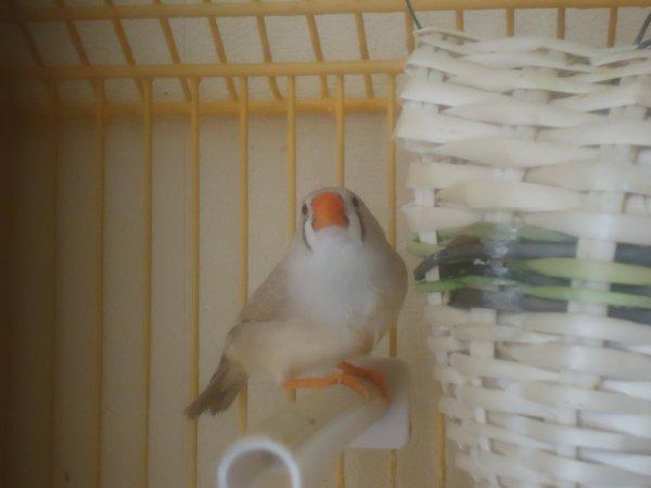 Des Photos de mes Mandarins de 2011