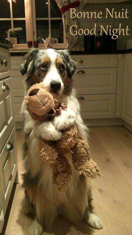 bon il est temps d'aller dodo! avecmon doudou