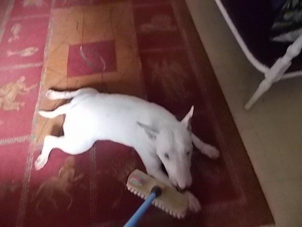 j'ai balayé mon chien! et elle adoire ca