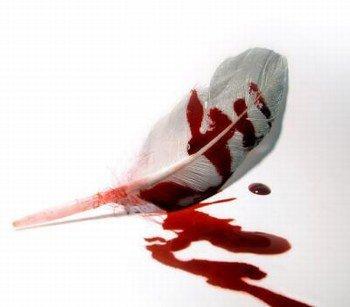 Plume en sang