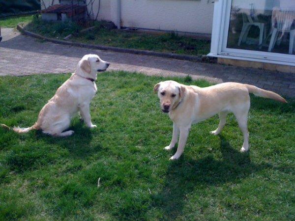 Chipie et Holly (qui est presque a sa taille)