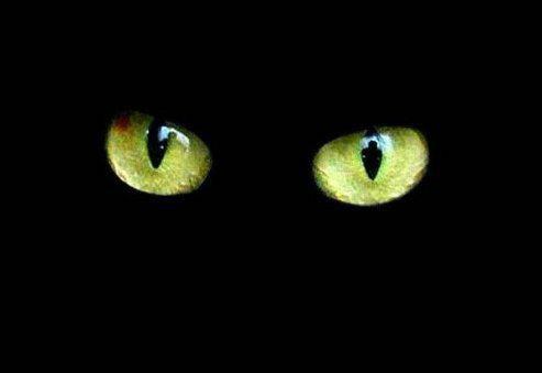 Un simple chat noir tu dis