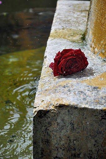 DESTIN D UNE  ROSE COUPE,,,,,