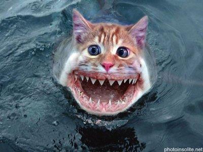 Quand un chat rencontre un requin