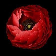 vivre a l'interieur d'une rose