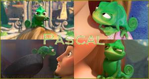 Zoom sur | Pascal