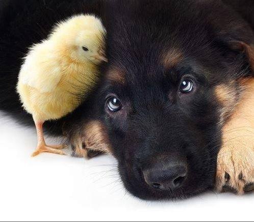 chien inoffensif