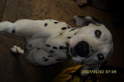Patch, Mon chien ♥