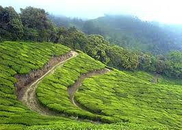 Kerala Tours - Know what makes it So Special Holiday Destination