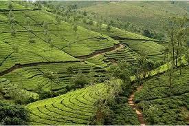 Explore Incredible Wonders in Kerala