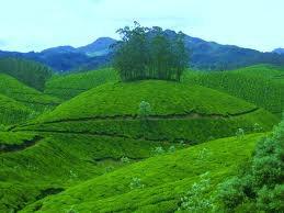 Souvenir of Kerala Tours - Enchanting and Memorable