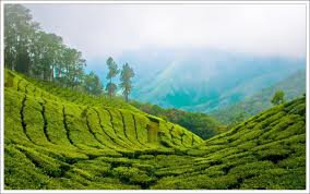 Make Your Dreams Come True By Exploring the Enigmatic Beauty of Kerala