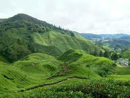 Munnar the Gem among all the Tourist Attractions