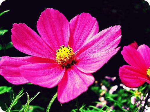 """""""Chaque baiser est une fleur, dont la racine est le coeur"""""""