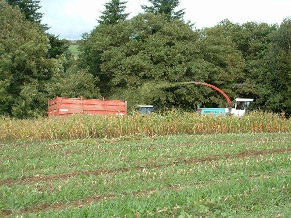 Ensilage maïs 2006