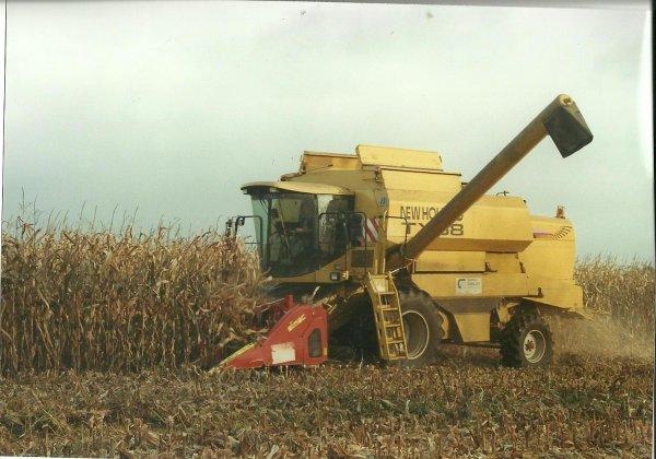 Maïs grain 2008