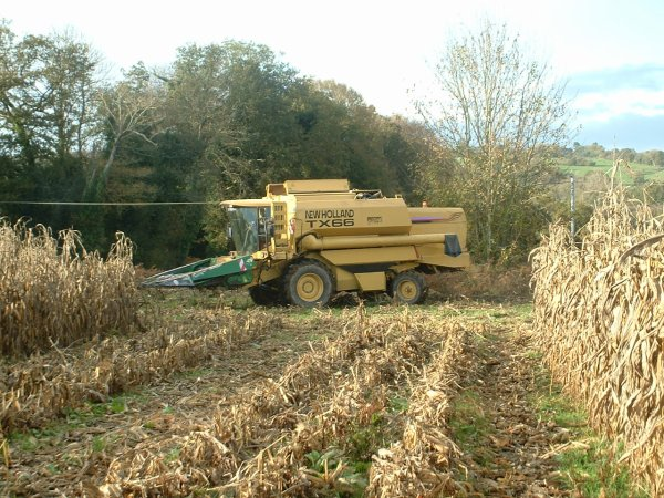 Maïs grain 2009