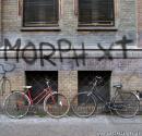 Photo de MorphXT