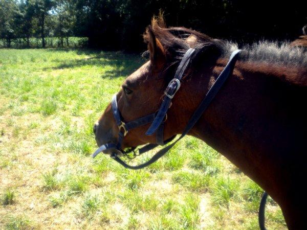 """""""Un cheval rétif marche derrière vous, un cheval impatient se promène en face de vous, mais un compagnon noble marche à côté de vous."""""""