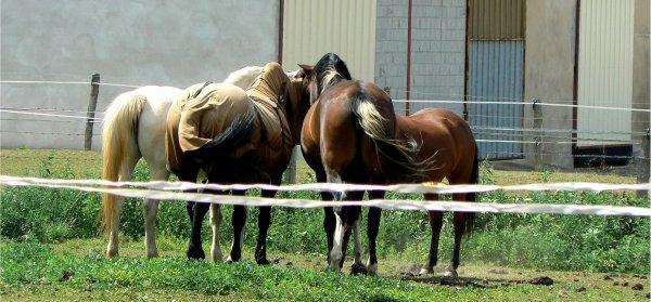 """""""Si quelqu'un te dit que ce n'est qu'un cheval, contente toi de sourire, il ne peut pas comprendre."""""""