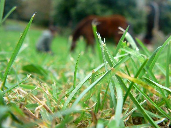 """""""Dans l'équitation, ce n'est pas le résultat qui compte mais la façon d'y parvenir."""""""