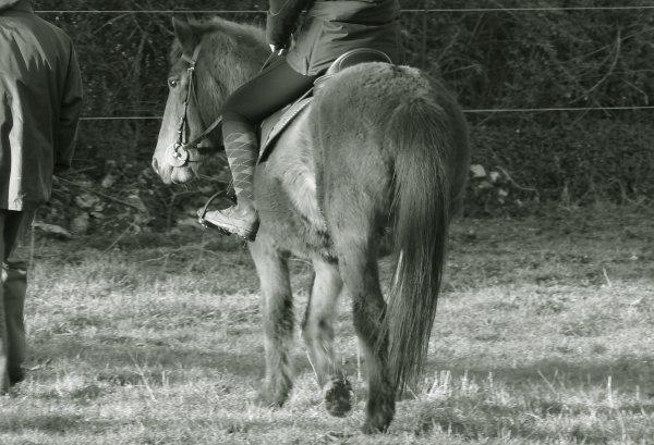 """""""On s'accorde à dire la beauté singulière d'un cavalier et sa monture. Cette image conjugue la grâce, l'élégance, la race qui lui donne sa haute noblesse. """""""
