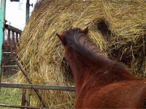 Des nouvelles du petit poney ? ;-)