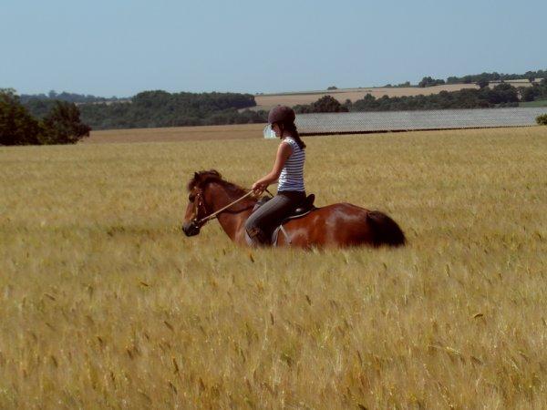 """""""L'homme qui possède un cheval est un homme libre."""" proverbe arabe"""