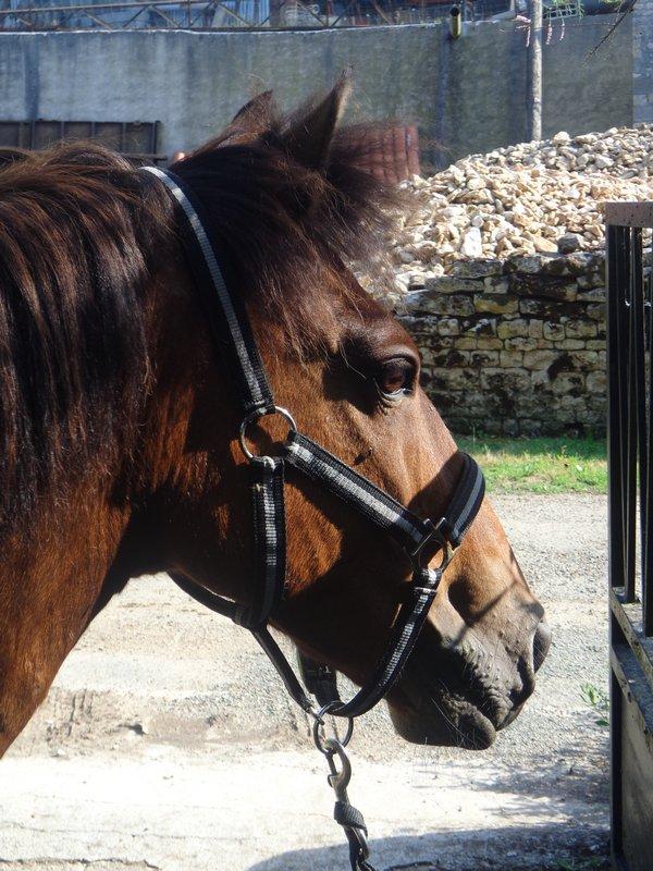 """""""Equus Caballus"""""""