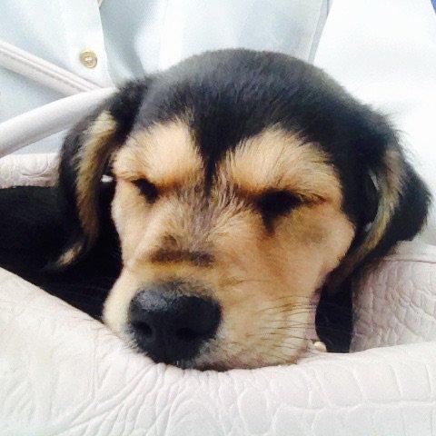 Ahaha tjrs elle dort ♥️