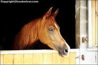 Le cheval d'Hugo