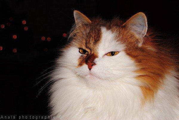 • Pussy.   - Le 10 Décembre 2010.