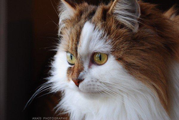 • Pussy    - Le 29 Décembre 2010.