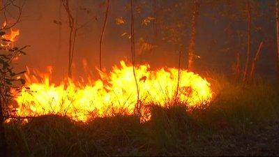 250 ha détruits par les flammes près de Lacanau