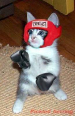 Boxing Kitten Cat