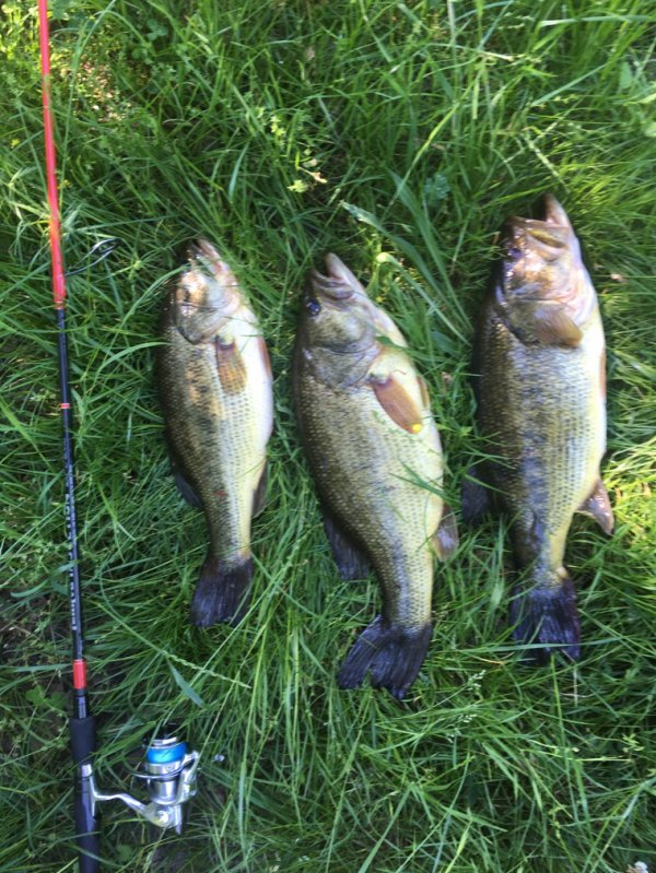 Première sortie du nouvel ensemble résultat record dépasser 2 fois plus petit bass à gauche 46 cm (relâcher)